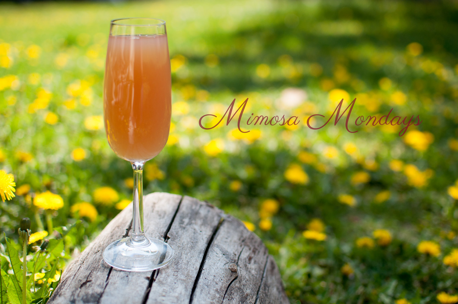 Jennifer-Hibberd-Photography-Mimosa-Monday's