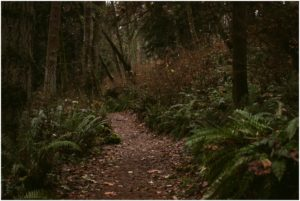 big-gulch-trail-washington_0025